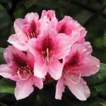 Blütenpracht im Botanischen Garten [Belfast]
