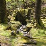 Glenveagh - Aus der Mitte entspringt ein Bach
