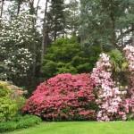 Glenveagh - Riesen-Rhododendren